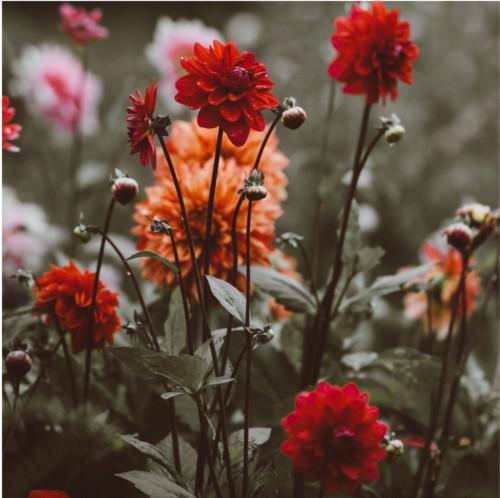 Jardinería, mantenimiento de instalaciones de riego, podas, abonados y tratamientos fitosanitarios.